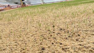 Почти 264 тысячи квадратных метров газонов прогребли за неделю в районе. Фото: mos.ru
