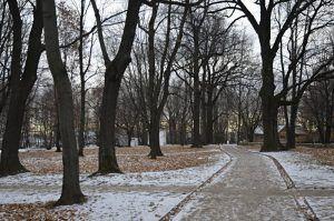 Деревья-крупномеры высадили на территории станции метро «Улица 1905 года». Фото: Анна Быкова