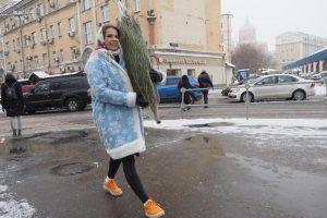 Пункт сдачи елей на переработку открылся в районе. Фото: Антон Гердо, «Вечерняя Москва»