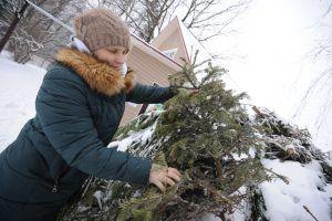 Горожанам сообщили о старте работы пунктов приема елок на переработку.Фото: архив, «Вечерняя Москва»