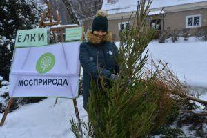 Жители района смогут принять участие в акции «Елочный круговорот — 2020». Фото: архив, «Вечерняя Москва»