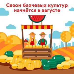 Сезон бахчевых культур начнется в августе