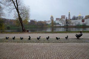 Экскурсию по Новодевичьему скверу проведут сотрудники библиотеки имени Аркадия Гайдара. Фото: Анна Быкова